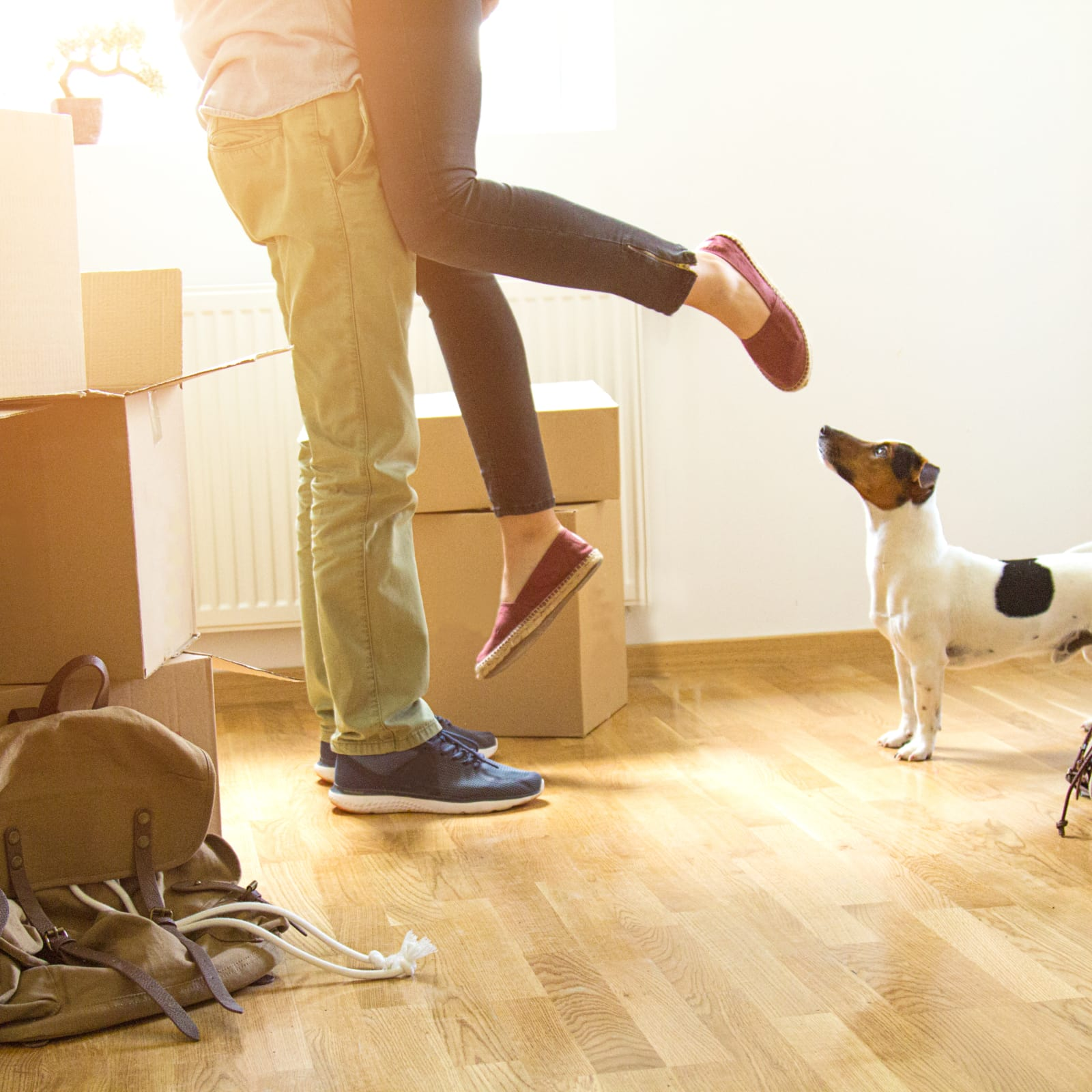 Why you need a Renters and Pet insurance